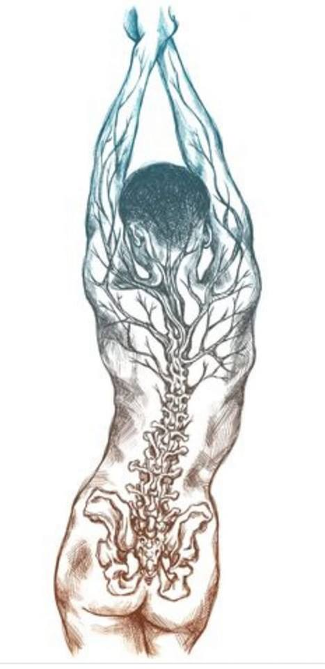 Illustration of a human spinal column and nerves