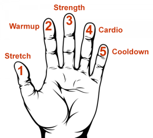 Illustration showing the 5 fingers of a hand